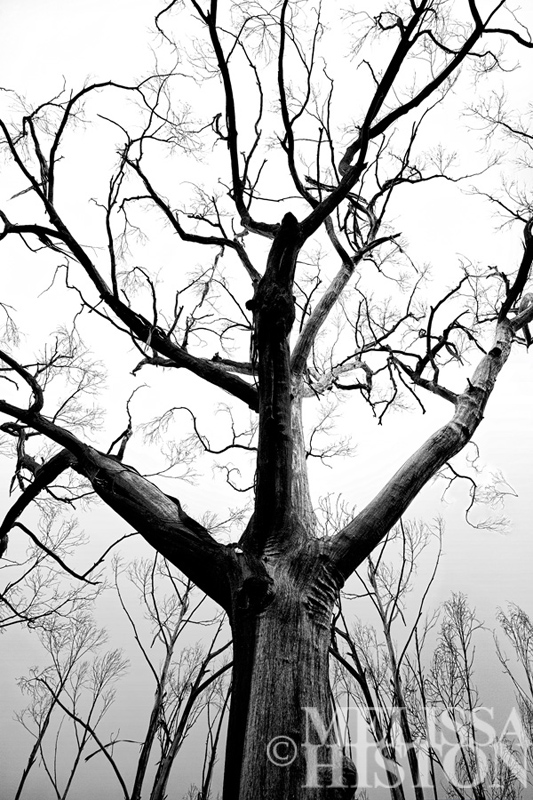 Black tree spirit