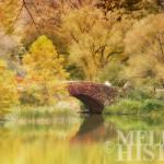 Central Park after Sandy