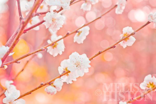 Oh my blossum I